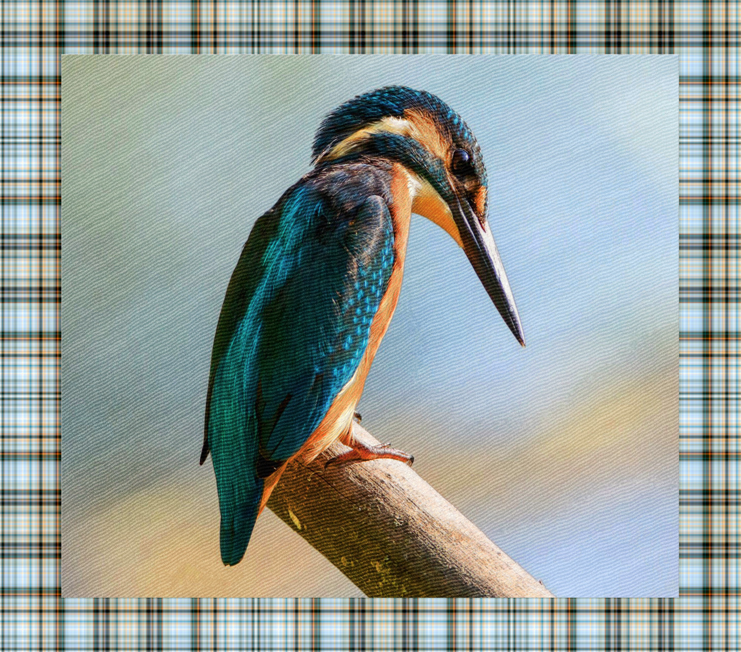 kingfisher_Original_DN_AnotherDrawingStyle_Simple+Nelo frame style.jpg